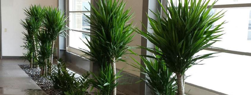 Alberta Tropical Plants