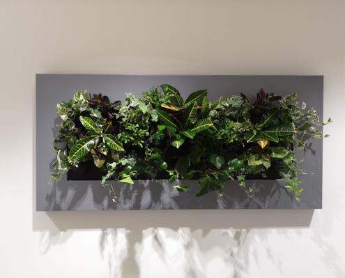 living wall for Alberta Tropical Plants