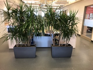 maintenance for Alberta Tropical Plants